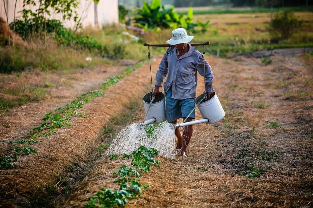 farmer bankruptcy